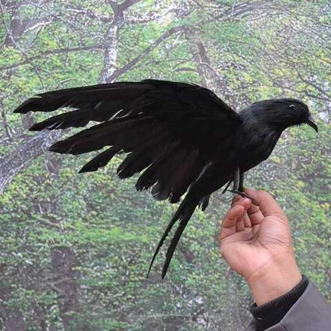 приснилась ворона