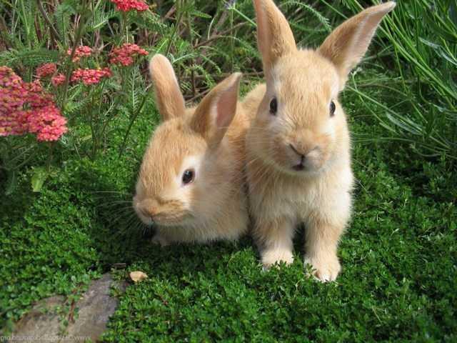 что значат кролики во сне