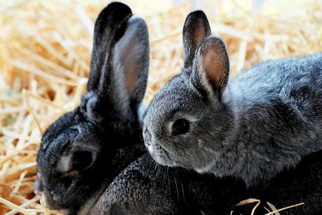 к чему приснились кролики
