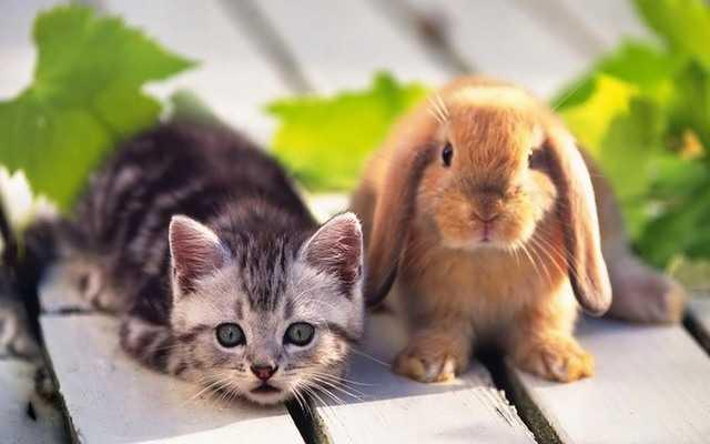 сонник крольчата