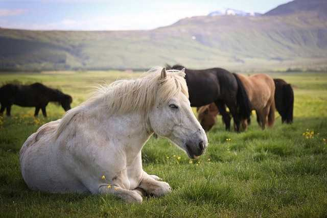 зачем снится лошадь
