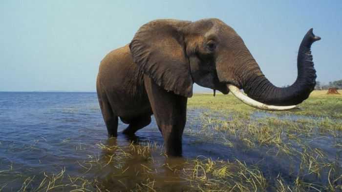 сон слон
