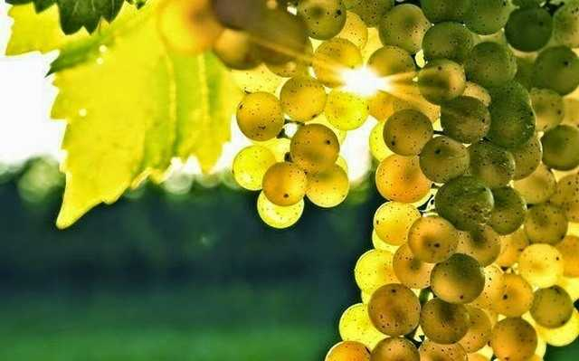 приснились виноградные гроздья
