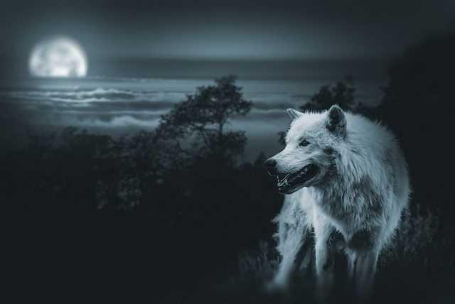 приснились волки