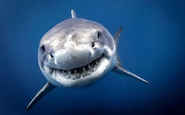 видеть акулу в сновидении