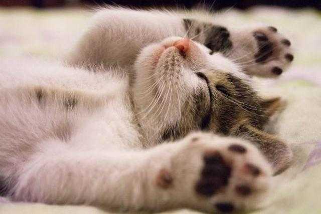 травить блох во сне