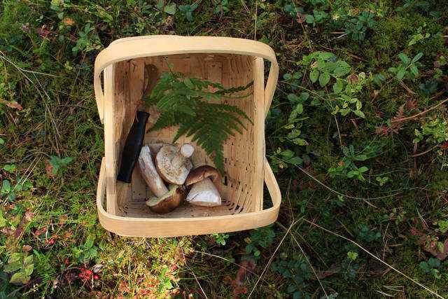 сонник грибы