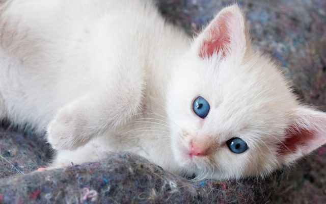 котик во сне