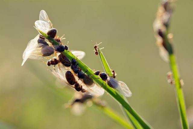 снятся мураши