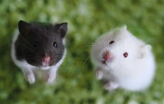 снится кошка ловит мышь