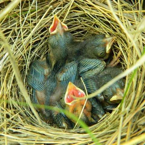сон гнездо