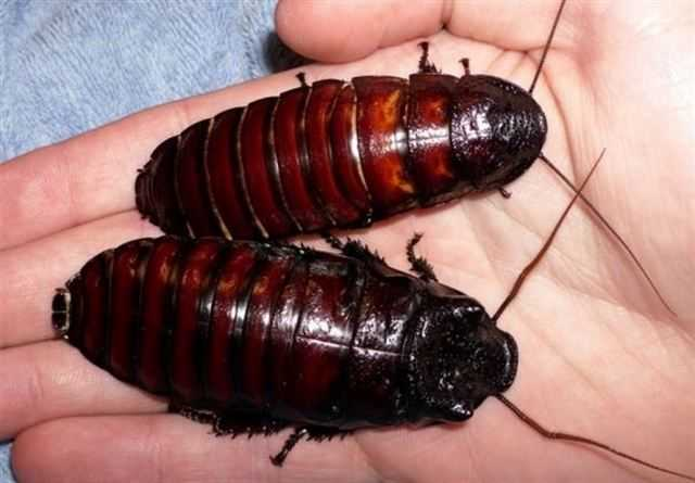 что значить во сне тараканы