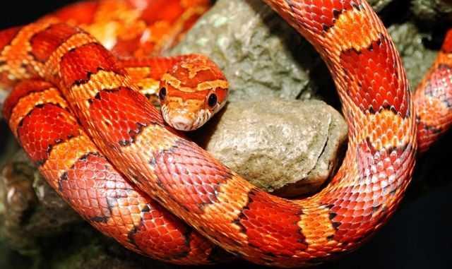 приснилась змея к чему