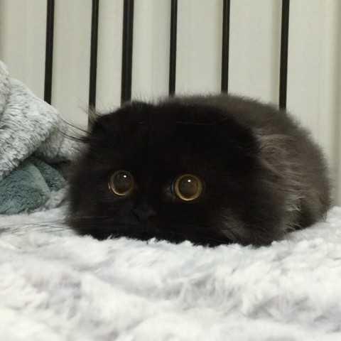 приснилась черная кошечка