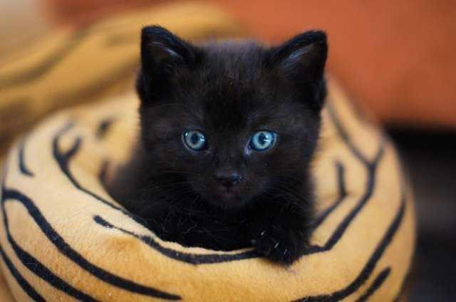 видеть черную кошку