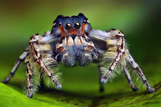 к чему снятся пауки