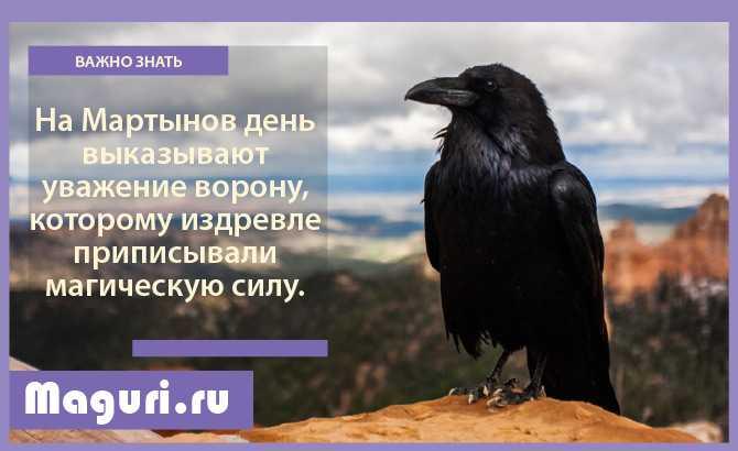 Почитание ворона