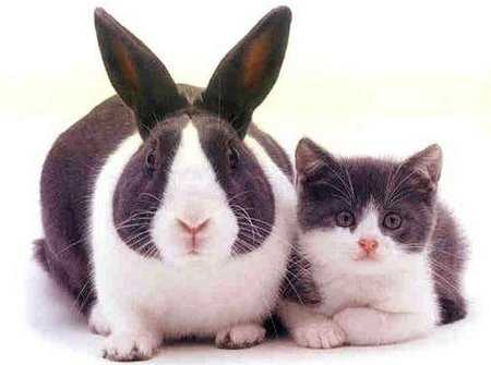 Год кролика (кота)