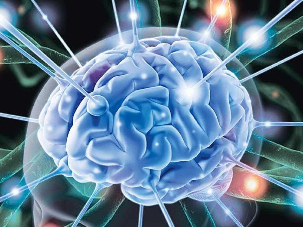 Мозг великий и загадочный