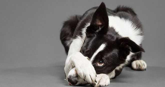 Сонники об умерших собаках