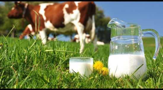 Продажа домашнего молока