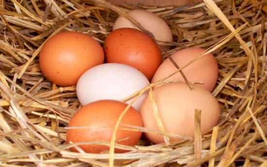 Очищение человека яйцом