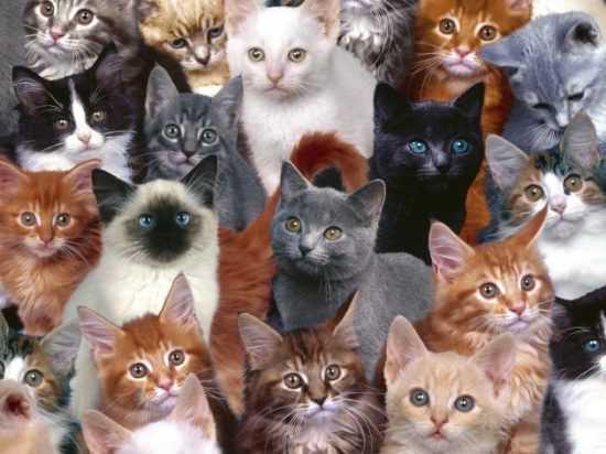 Окрас кошек, суеверия