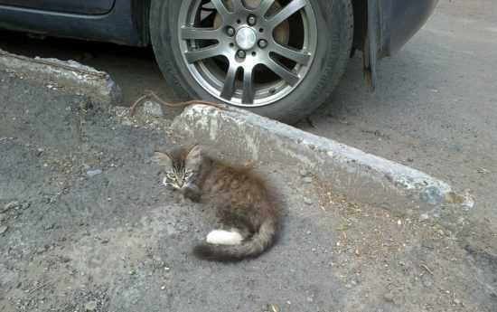 Сбил кошку на машине