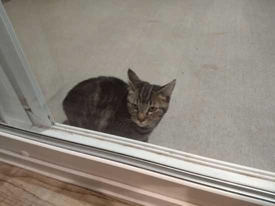 Кошка пришла в дом