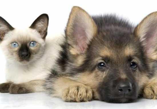 Молитвы и заговоры о домашних животных