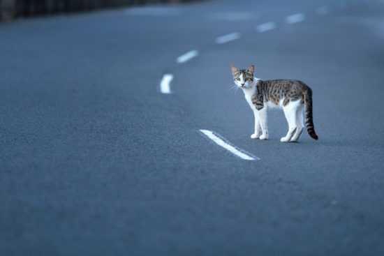 Кошка перебежала дорогу