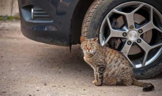Примета, если сбил кошку на машине