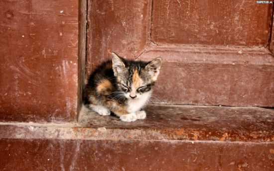 Приметы про приблудившихся котов