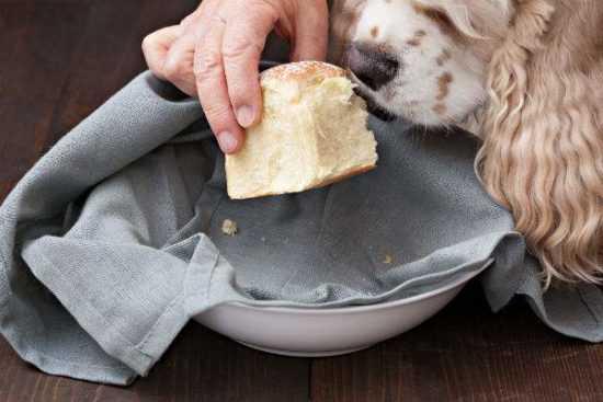 Хлеб скормить собаке