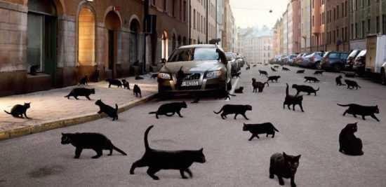 Наезд на кошку машиной