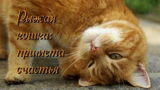 Рыжий кот в квартире