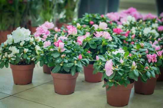 Горшок с цветущим растением