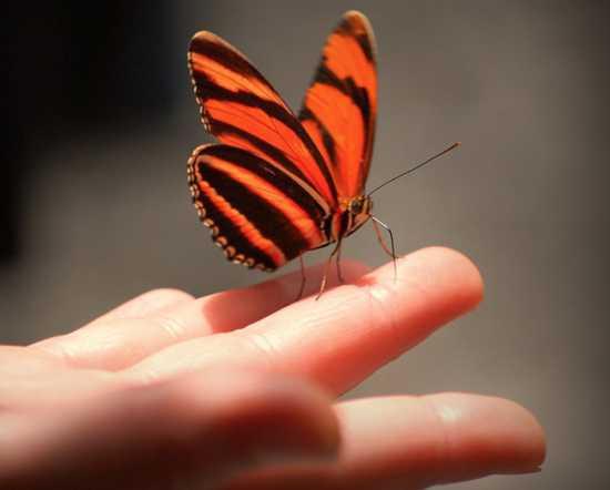Бабочка села на руку