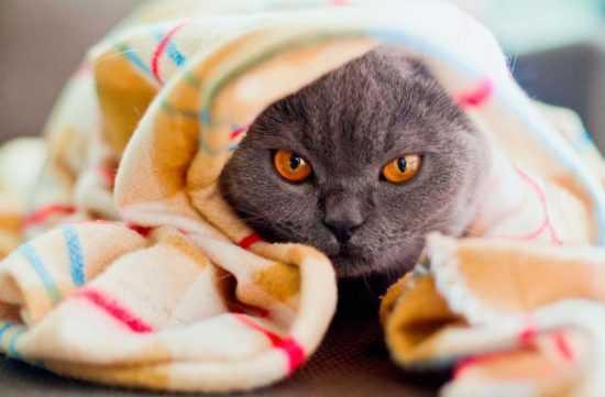 Чихающая кошка