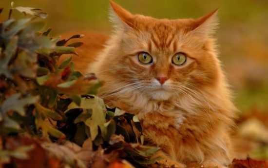 Встретить на улицерыжего кота