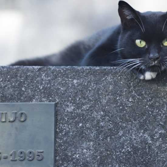 Кошка пришла на могилу