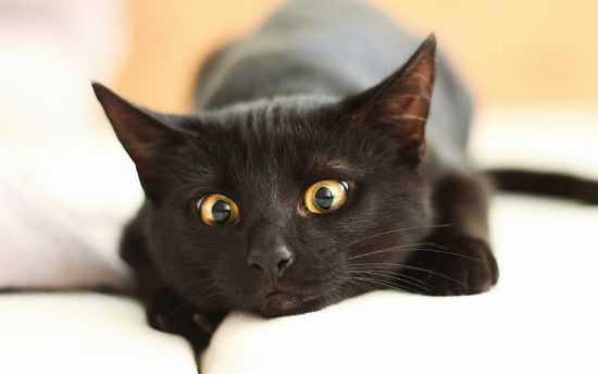 Черная кошка в постеле
