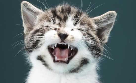 Кошка чихнула