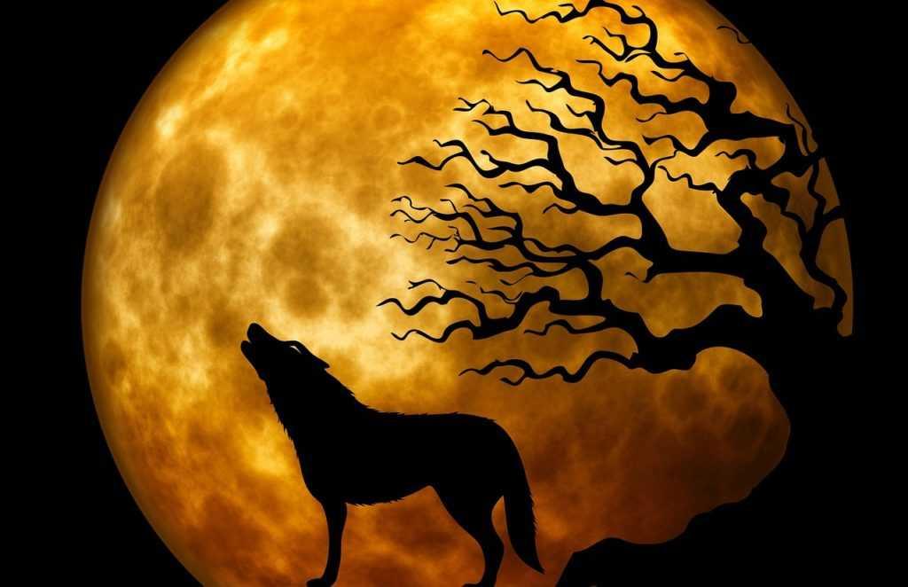 Луна и волк