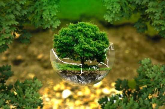 Заговор на деревья
