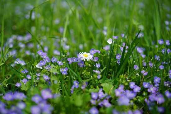 Чудодейственный наговор на лекарственных травах
