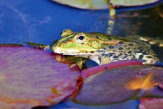 При стенокардии (грудной жабе)