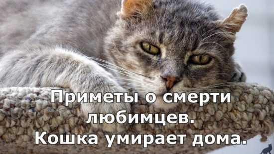 Приметы о смерти кошки