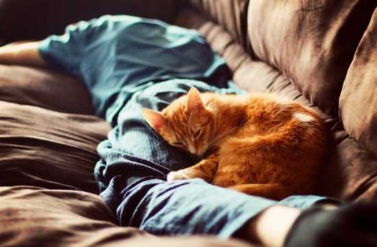 Спящие кошки