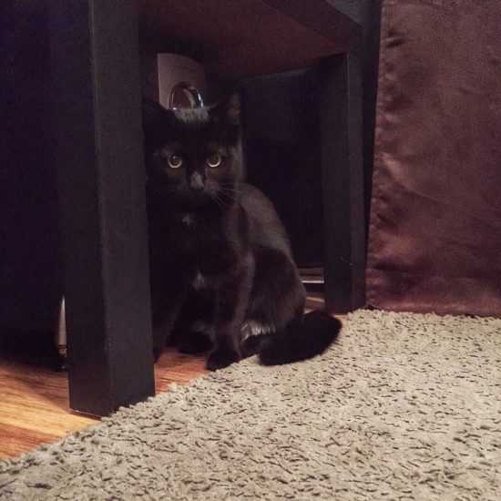 Черная кошка на пороге